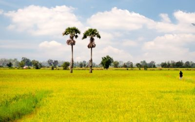 VISIT TAY NINH VILLAGE AND CU CHI TUNNELS